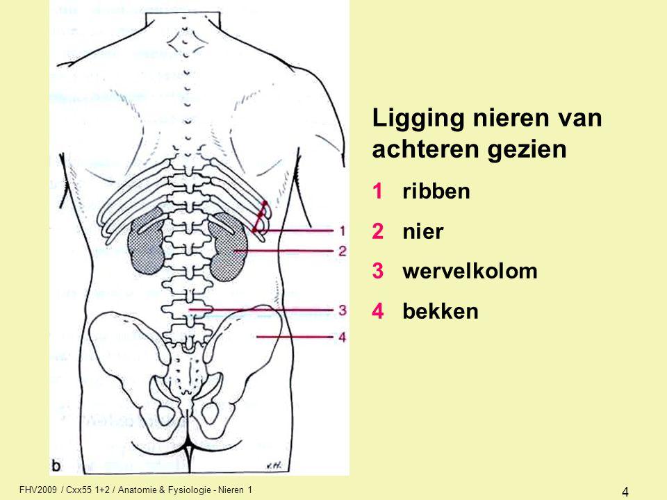 FHV2009 / Cxx55 1+2 / Anatomie & Fysiologie - Nieren 1 4 Ligging nieren van achteren gezien 1 ribben 2 nier 3 wervelkolom 4 bekken