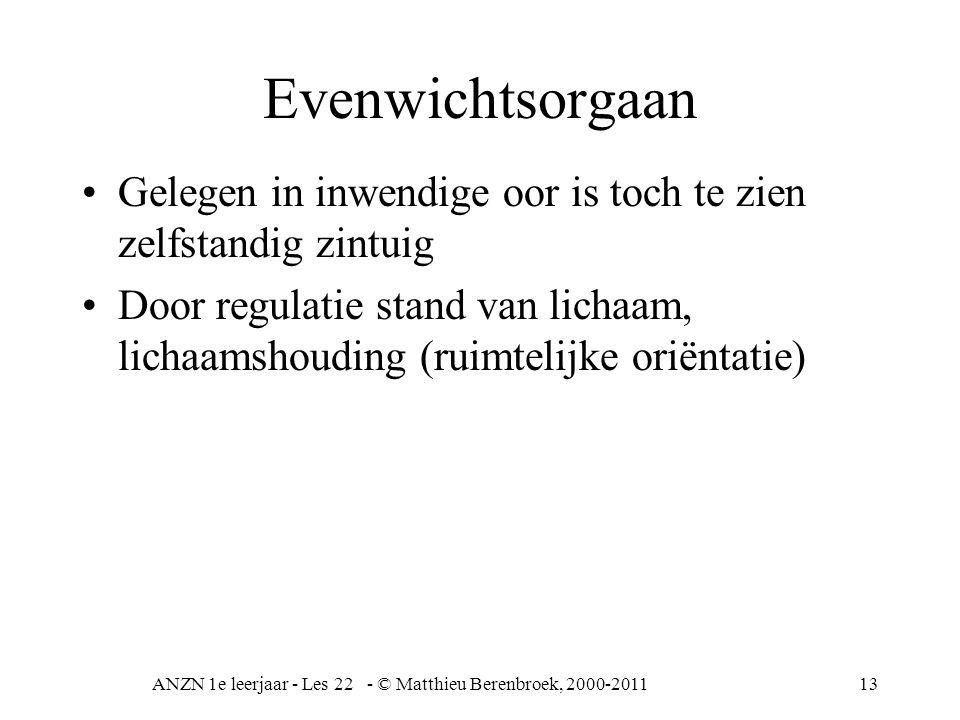 ANZN 1e leerjaar - Les 22 - © Matthieu Berenbroek, 2000-201113 Evenwichtsorgaan Gelegen in inwendige oor is toch te zien zelfstandig zintuig Door regu