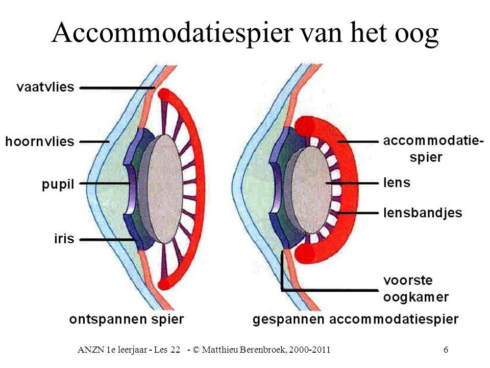 ANZN 1e leerjaar - Les 22 - © Matthieu Berenbroek, 2000-201117 middenoor Trommelholte buis van Eustachius gehoorbeentjes/ steel / hamer / aambeeld ovale venster