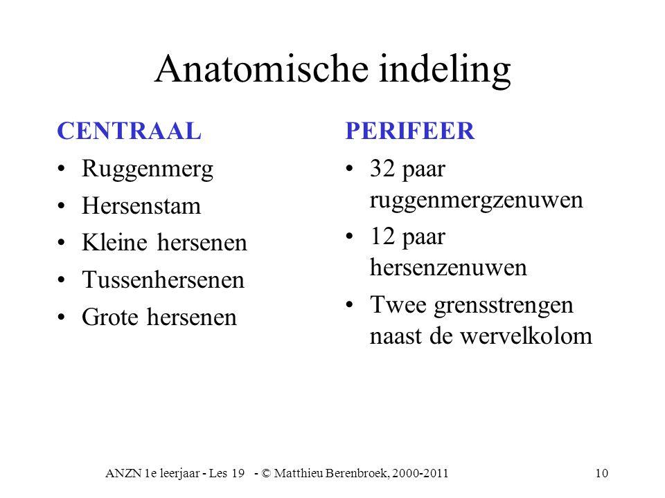ANZN 1e leerjaar - Les 19 - © Matthieu Berenbroek, 2000-201110 Anatomische indeling CENTRAAL Ruggenmerg Hersenstam Kleine hersenen Tussenhersenen Grot