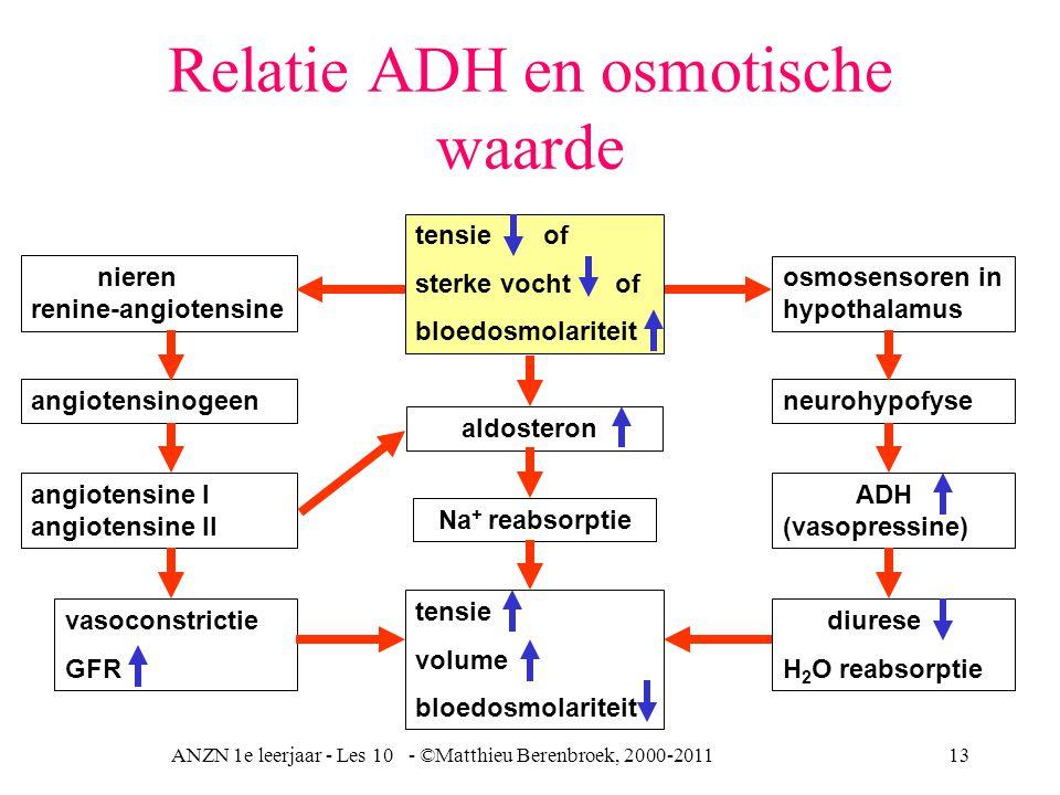 ANZN 1e leerjaar - Les 10 - ©Matthieu Berenbroek, 2000-201113 Relatie ADH en osmotische waarde nieren renine-angiotensine angiotensinogeen angiotensine I angiotensine II vasoconstrictie GFR osmosensoren in hypothalamus neurohypofyse ADH (vasopressine) diurese H 2 O reabsorptie tensie volume bloedosmolariteit tensie of sterke vocht of bloedosmolariteit aldosteron Na + reabsorptie