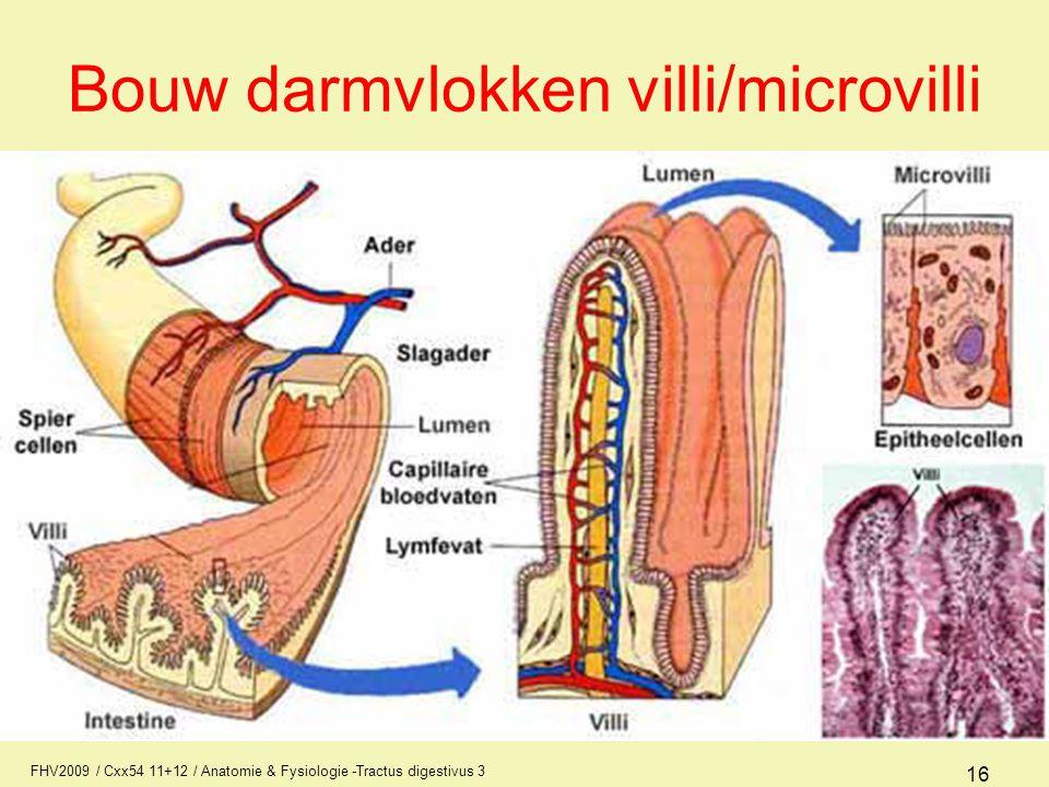 FHV2009 / Cxx54 11+12 / Anatomie & Fysiologie -Tractus digestivus 3 16 Bouw darmvlokken villi/microvilli