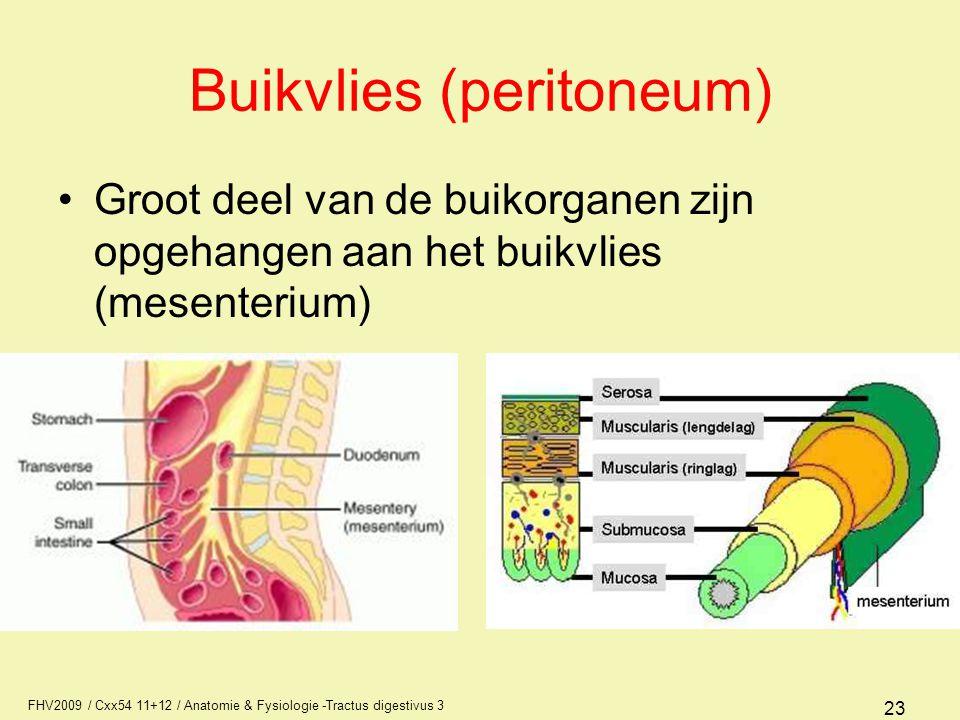 FHV2009 / Cxx54 11+12 / Anatomie & Fysiologie -Tractus digestivus 3 23 Buikvlies (peritoneum) Groot deel van de buikorganen zijn opgehangen aan het bu