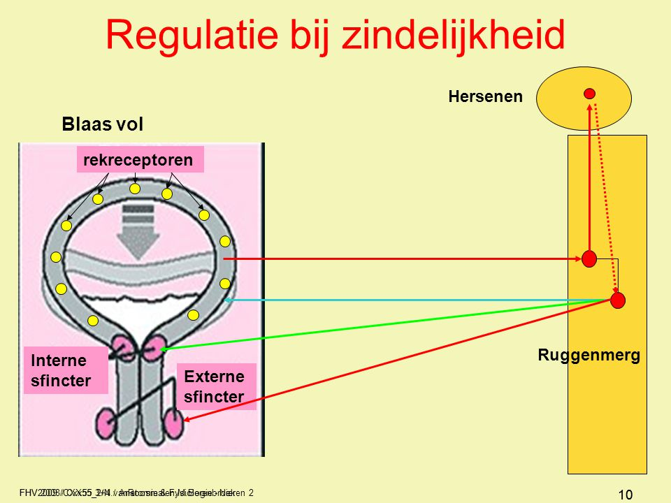 FHV2009 / Cxx55 3+4 / Anatomie & Fysiologie - Nieren 2 10 FHV 2008/CXX55_2/N.vanRoosmalen,M.Berenbroek 10 Regulatie bij zindelijkheid Blaas vol Ruggen