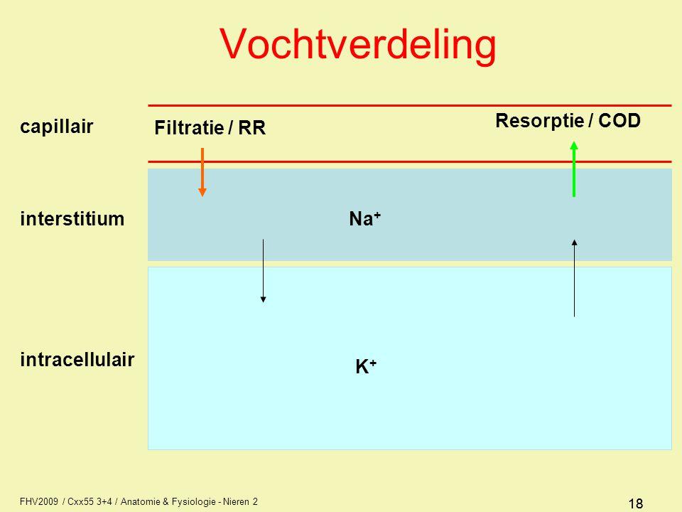 FHV2009 / Cxx55 3+4 / Anatomie & Fysiologie - Nieren 2 18 Vochtverdeling Filtratie / RR Resorptie / COD capillair interstitiumNa + K+K+ intracellulair