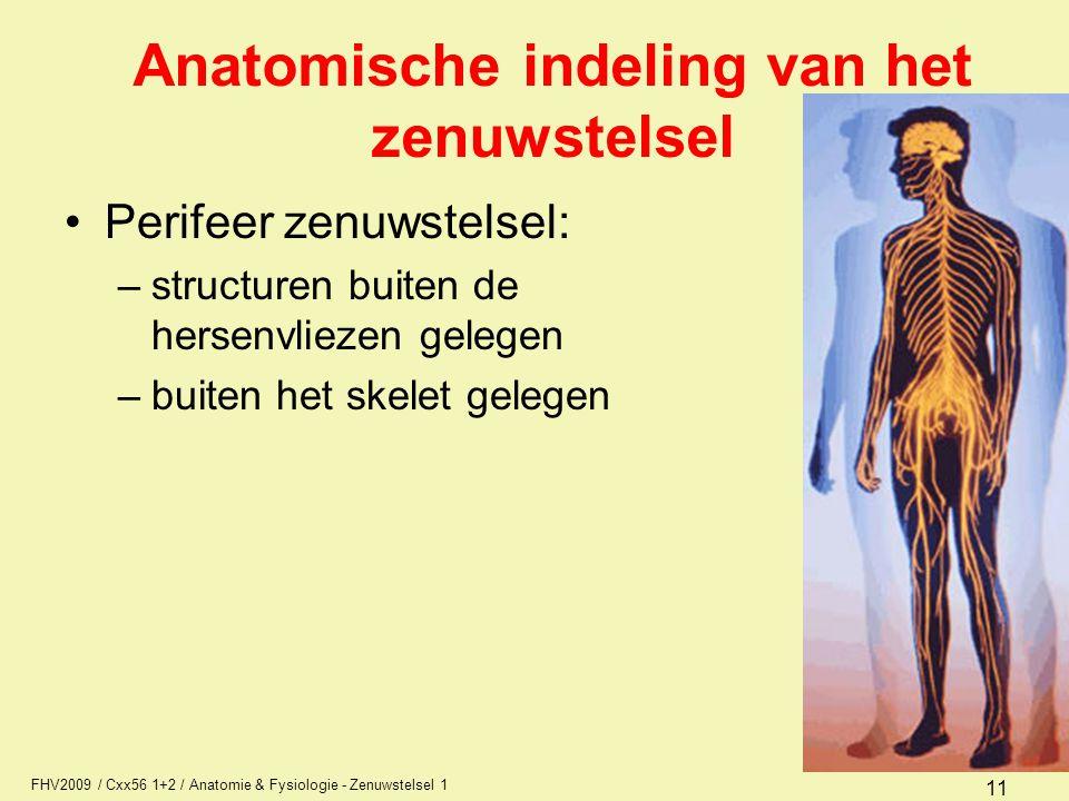 FHV2009 / Cxx56 1+2 / Anatomie & Fysiologie - Zenuwstelsel 1 11 Anatomische indeling van het zenuwstelsel Perifeer zenuwstelsel: –structuren buiten de hersenvliezen gelegen –buiten het skelet gelegen