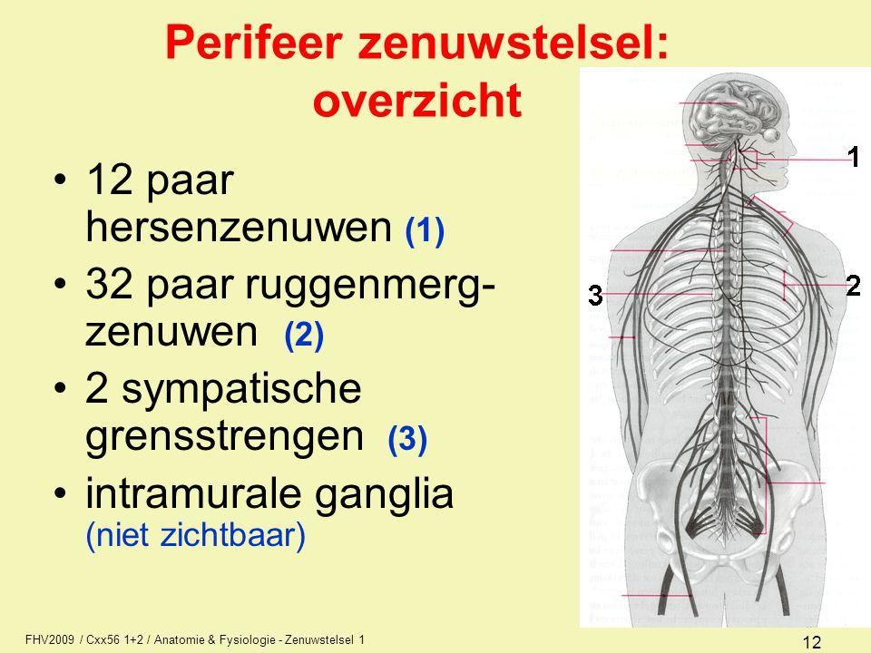 FHV2009 / Cxx56 1+2 / Anatomie & Fysiologie - Zenuwstelsel 1 12 Perifeer zenuwstelsel: overzicht 12 paar hersenzenuwen (1) 32 paar ruggenmerg- zenuwen (2) 2 sympatische grensstrengen (3) intramurale ganglia (niet zichtbaar)