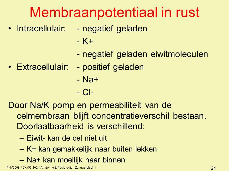 FHV2009 / Cxx56 1+2 / Anatomie & Fysiologie - Zenuwstelsel 1 24 Membraanpotentiaal in rust Intracellulair:- negatief geladen - K+ - negatief geladen eiwitmoleculen Extracellulair:- positief geladen - Na+ - Cl- Door Na/K pomp en permeabiliteit van de celmembraan blijft concentratieverschil bestaan.