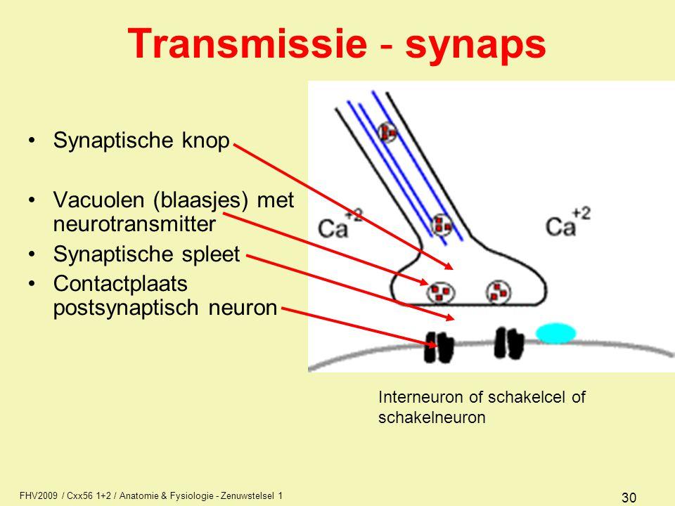 FHV2009 / Cxx56 1+2 / Anatomie & Fysiologie - Zenuwstelsel 1 30 Transmissie - synaps Synaptische knop Vacuolen (blaasjes) met neurotransmitter Synaptische spleet Contactplaats postsynaptisch neuron Interneuron of schakelcel of schakelneuron
