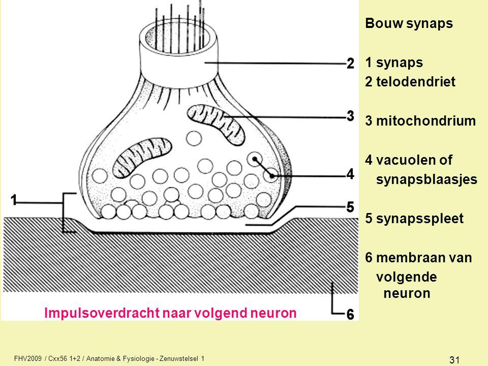 FHV2009 / Cxx56 1+2 / Anatomie & Fysiologie - Zenuwstelsel 1 31 Bouw synaps 1 synaps 2 telodendriet 3 mitochondrium 4 vacuolen of synapsblaasjes 5 synapsspleet 6 membraan van volgende neuron Impulsoverdracht naar volgend neuron