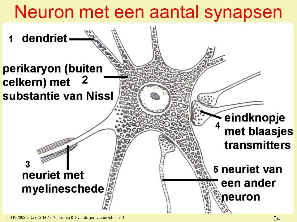FHV2009 / Cxx56 1+2 / Anatomie & Fysiologie - Zenuwstelsel 1 34 Neuron met een aantal synapsen