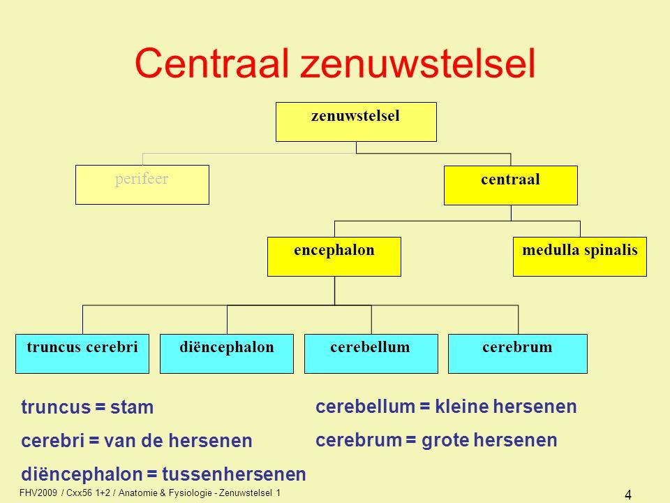 FHV2009 / Cxx56 1+2 / Anatomie & Fysiologie - Zenuwstelsel 1 4 Centraal zenuwstelsel zenuwstelsel perifeer centraal encephalonmedulla spinalis diëncephaloncerebrumcerebellumtruncus cerebri truncus = stam cerebri = van de hersenen diëncephalon = tussenhersenen cerebellum = kleine hersenen cerebrum = grote hersenen