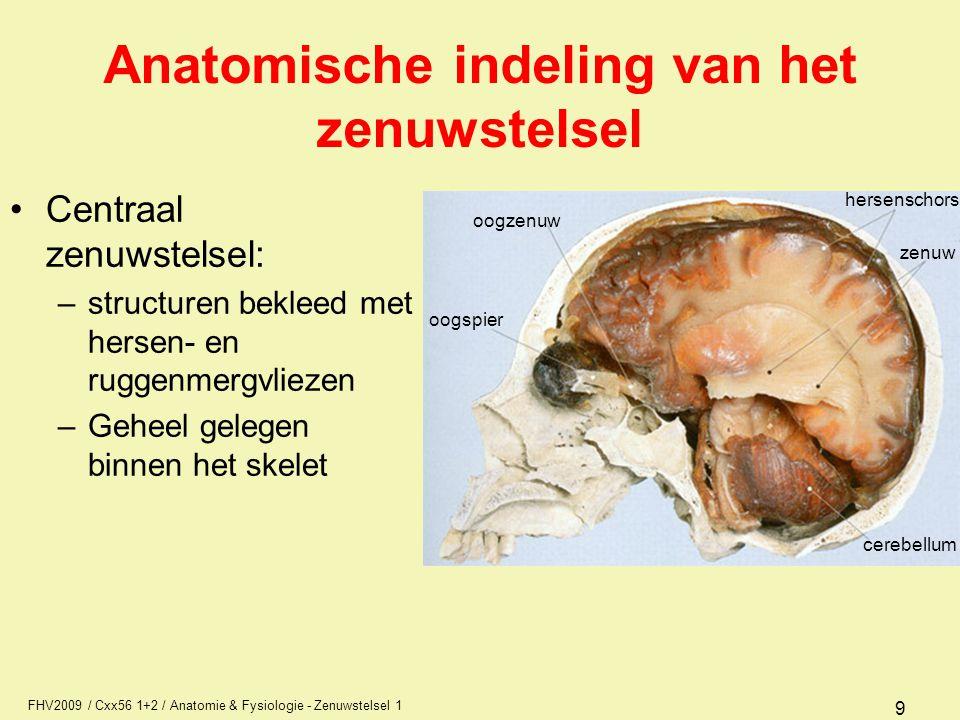 FHV2009 / Cxx56 1+2 / Anatomie & Fysiologie - Zenuwstelsel 1 9 Anatomische indeling van het zenuwstelsel Centraal zenuwstelsel: –structuren bekleed met hersen- en ruggenmergvliezen –Geheel gelegen binnen het skelet oogzenuw oogspier cerebellum zenuw hersenschors