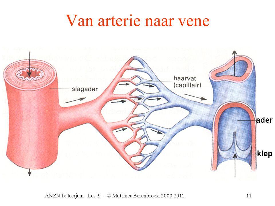 ANZN 1e leerjaar - Les 5 - © Matthieu Berenbroek, 2000-201111 Van arterie naar vene ader klep
