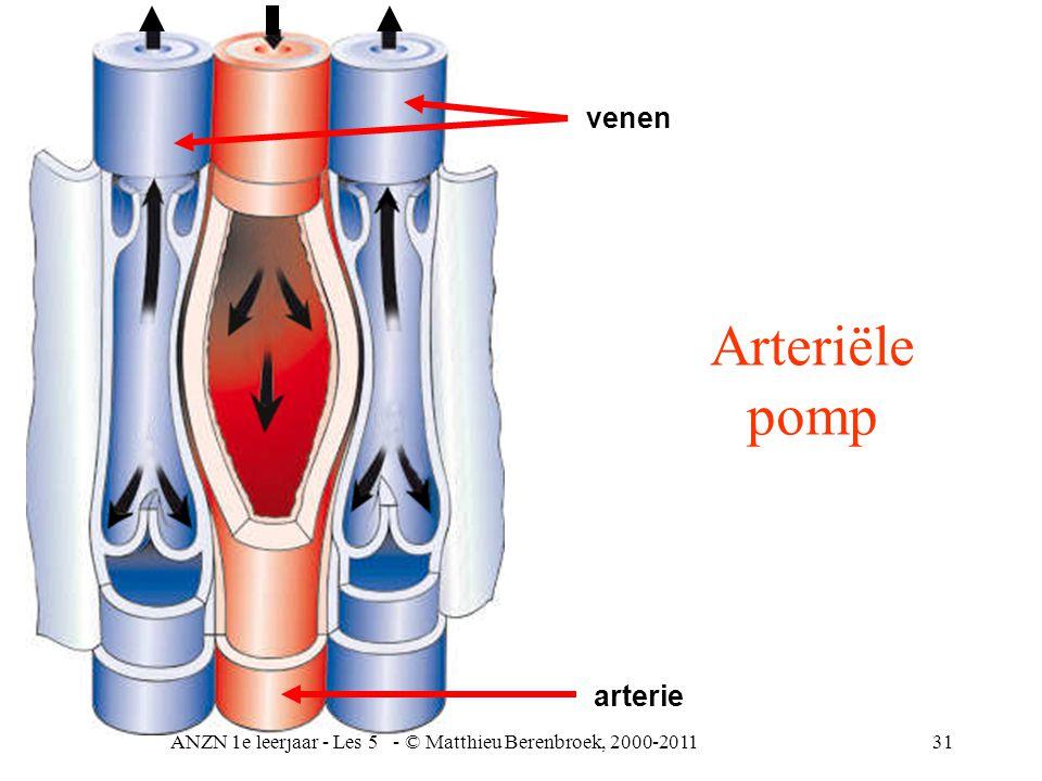 ANZN 1e leerjaar - Les 5 - © Matthieu Berenbroek, 2000-201131 venen arterie Arteriële pomp
