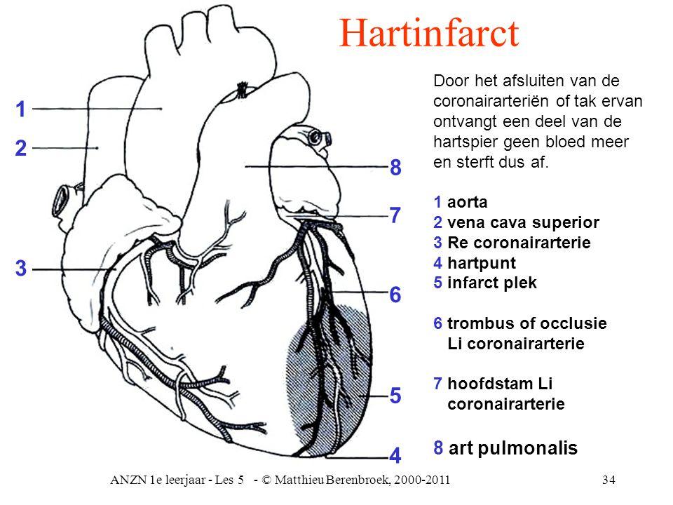 ANZN 1e leerjaar - Les 5 - © Matthieu Berenbroek, 2000-201134 Door het afsluiten van de coronairarteriën of tak ervan ontvangt een deel van de hartspi