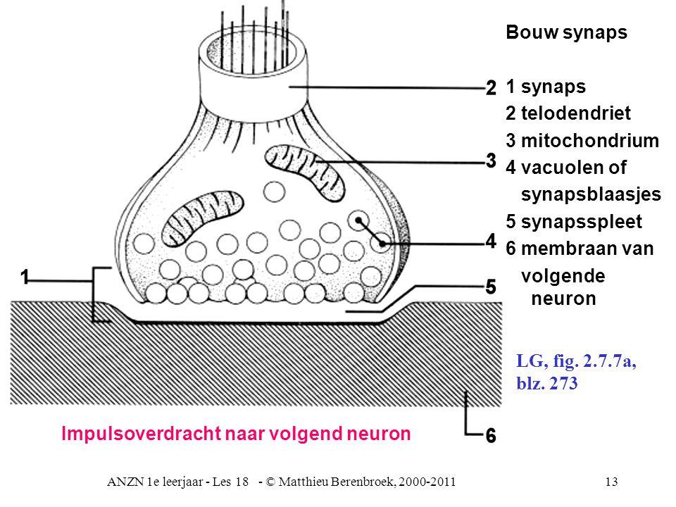 ANZN 1e leerjaar - Les 18 - © Matthieu Berenbroek, 2000-201113 Bouw synaps 1 synaps 2 telodendriet 3 mitochondrium 4 vacuolen of synapsblaasjes 5 synapsspleet 6 membraan van volgende neuron LG, fig.
