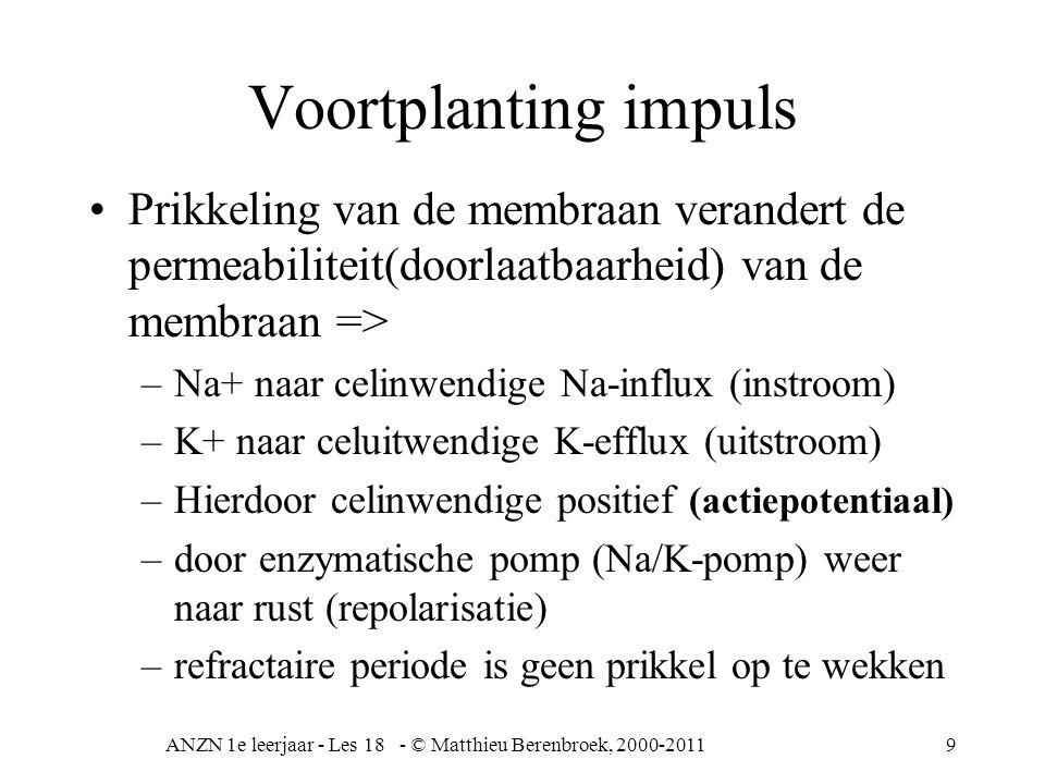 ANZN 1e leerjaar - Les 18 - © Matthieu Berenbroek, 2000-20119 Voortplanting impuls Prikkeling van de membraan verandert de permeabiliteit(doorlaatbaarheid) van de membraan => –Na+ naar celinwendige Na-influx (instroom) –K+ naar celuitwendige K-efflux (uitstroom) –Hierdoor celinwendige positief (actiepotentiaal) –door enzymatische pomp (Na/K-pomp) weer naar rust (repolarisatie) –refractaire periode is geen prikkel op te wekken