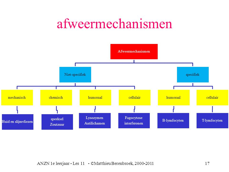 ANZN 1e leerjaar - Les 11 - ©Matthieu Berenbroek, 2000-201117 Afweermechanismen Niet-specifiek mechanisch Huid en slijmvliezen chemisch speeksel Zoutz