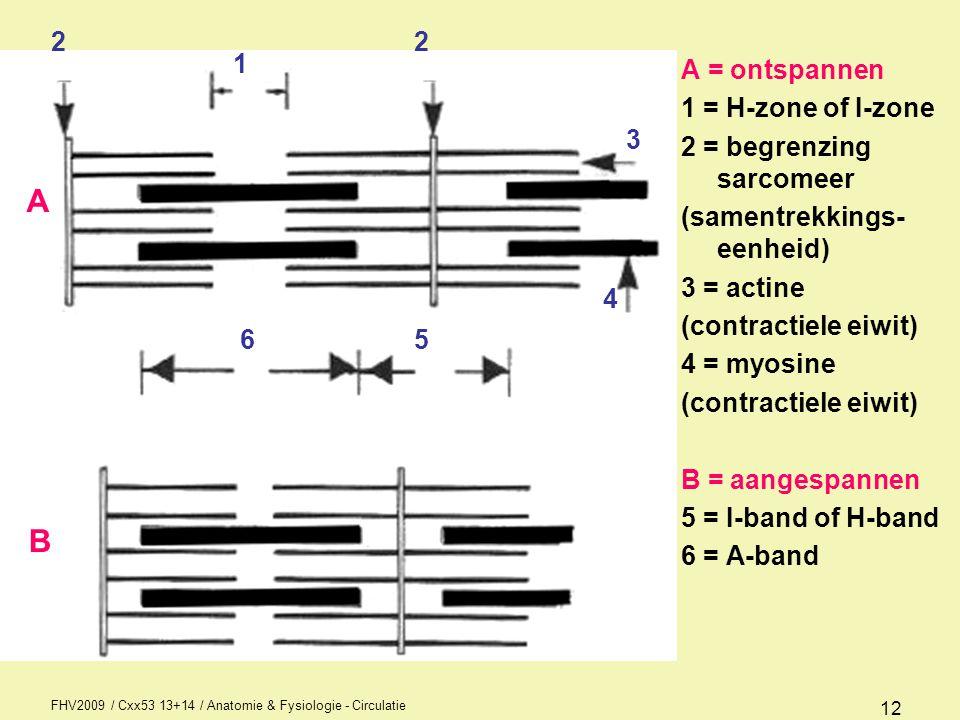 FHV2009 / Cxx53 13+14 / Anatomie & Fysiologie - Circulatie 13 Clonus en Spiertonus Clonus is de situatie waarbij de spier te snel na elkaar geprikkeld wordt clonisch en tonisch wisselen elkaar af Spiertonus = rustspanning, dit voorkomt dat we in elkaar zakken, reflectorisch geregeld Refractaire periode = periode waarbij geen enkele prikkeling de spier kan doen contraheren, de spiercellen zijn bezig naar de rustsituatie te gaan