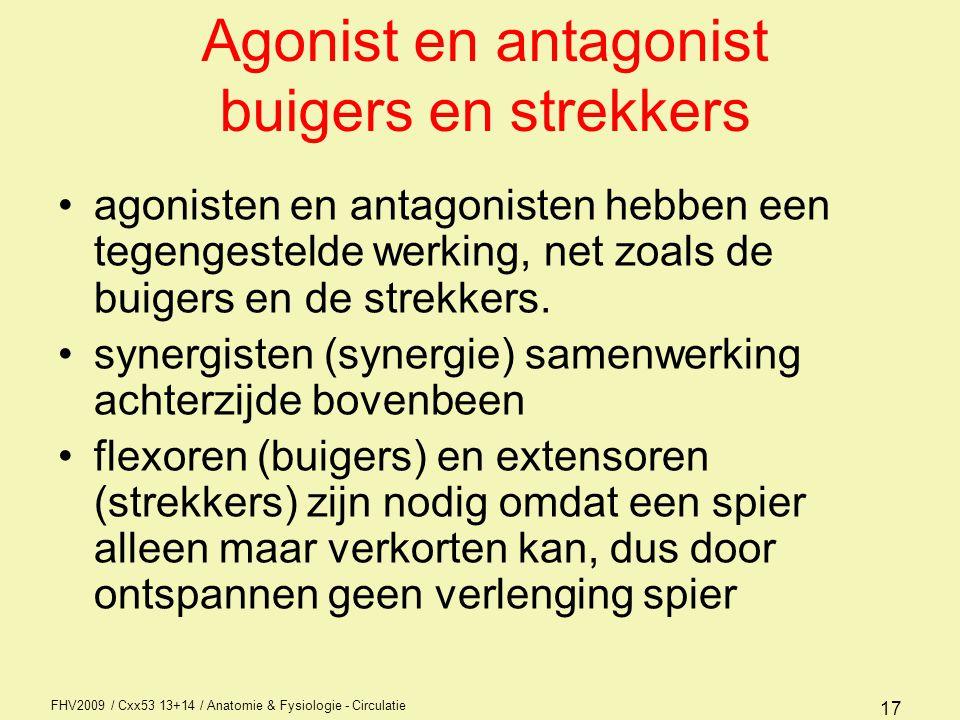 FHV2009 / Cxx53 13+14 / Anatomie & Fysiologie - Circulatie 17 Agonist en antagonist buigers en strekkers agonisten en antagonisten hebben een tegenges
