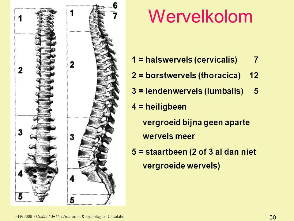 FHV2009 / Cxx53 13+14 / Anatomie & Fysiologie - Circulatie 31 Krommingen in de wervels kyfose = de bocht schouderbladen naar achteren gericht (borstkyfose) lordose = bocht in de heupen naar voren gericht (lendelordose) scoliose = zijwaartse bocht niet standaard tot 60% van de bevolking meer of minder dubbele scoliose = dubbele bocht Pas op: als gezegd wordt door een arts dat iemand een kyfose of lordose heeft dan bedoelt hij dat die pathologisch is.