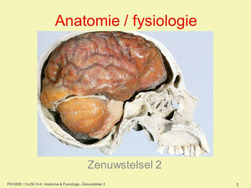 FHV2009 / Cxx56 3+4 / Anatomie & Fysiologie - Zenuwstelsel 2 22 Cerebrum (grote hersenen) Het cerebrum bestaat uit een linker en rechter hemisfeer De buitenste laag van het cerebrum heet schors is grijs van kleur Daarbinnen ligt het merg (kleur wit)