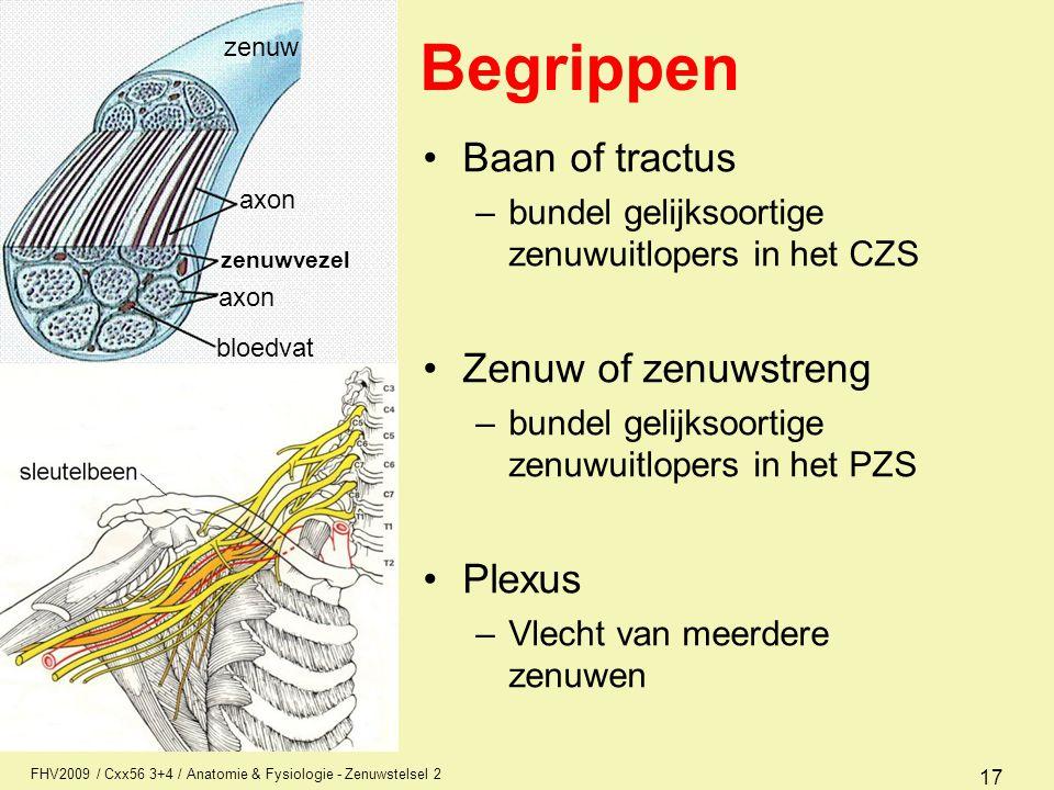 FHV2009 / Cxx56 3+4 / Anatomie & Fysiologie - Zenuwstelsel 2 17 Begrippen Baan of tractus –bundel gelijksoortige zenuwuitlopers in het CZS Zenuw of ze
