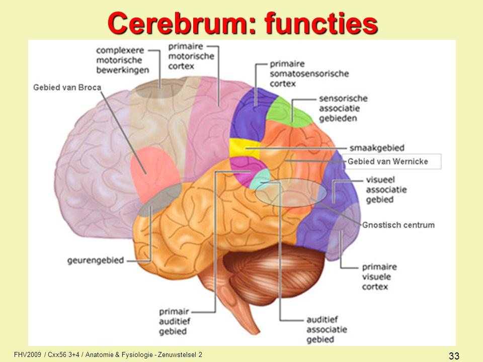 FHV2009 / Cxx56 3+4 / Anatomie & Fysiologie - Zenuwstelsel 2 33 Cerebrum: functies