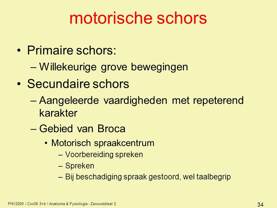 FHV2009 / Cxx56 3+4 / Anatomie & Fysiologie - Zenuwstelsel 2 34 motorische schors Primaire schors: –Willekeurige grove bewegingen Secundaire schors –A