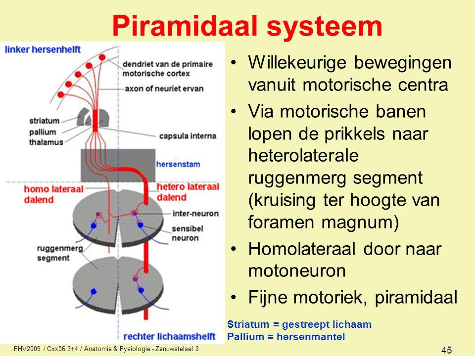 FHV2009 / Cxx56 3+4 / Anatomie & Fysiologie - Zenuwstelsel 2 45 Piramidaal systeem Willekeurige bewegingen vanuit motorische centra Via motorische ban