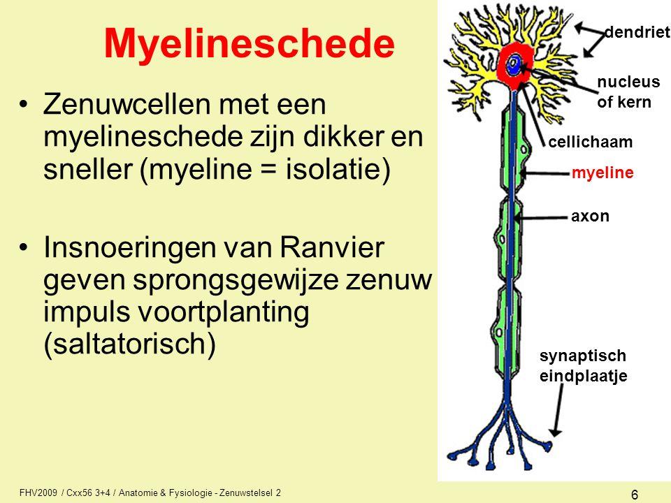 FHV2009 / Cxx56 3+4 / Anatomie & Fysiologie - Zenuwstelsel 2 17 Begrippen Baan of tractus –bundel gelijksoortige zenuwuitlopers in het CZS Zenuw of zenuwstreng –bundel gelijksoortige zenuwuitlopers in het PZS Plexus –Vlecht van meerdere zenuwen zenuw axon zenuwvezel bloedvat