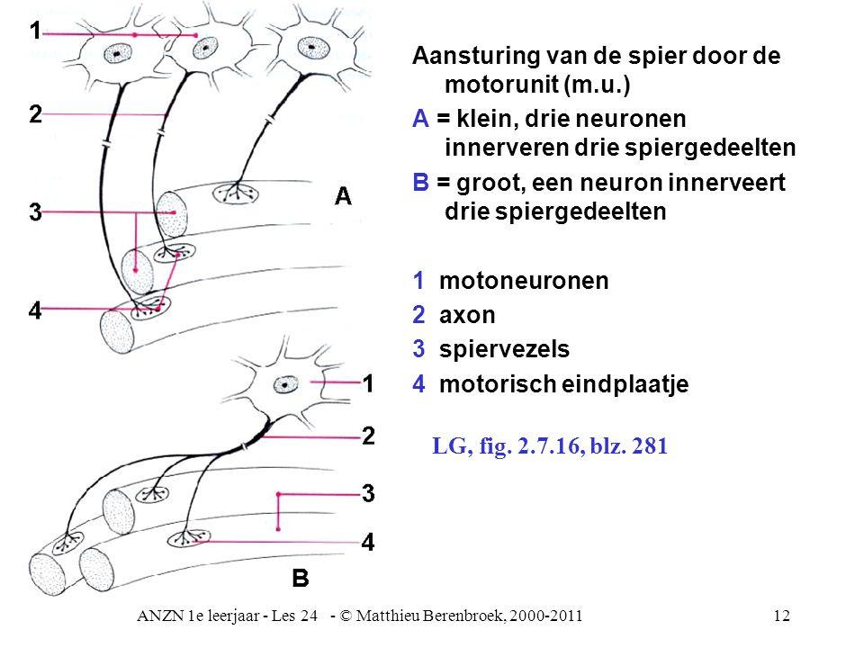 ANZN 1e leerjaar - Les 24 - © Matthieu Berenbroek, 2000-201112 Aansturing van de spier door de motorunit (m.u.) A = klein, drie neuronen innerveren dr