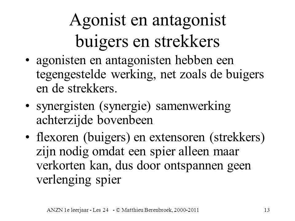 ANZN 1e leerjaar - Les 24 - © Matthieu Berenbroek, 2000-201113 Agonist en antagonist buigers en strekkers agonisten en antagonisten hebben een tegenge