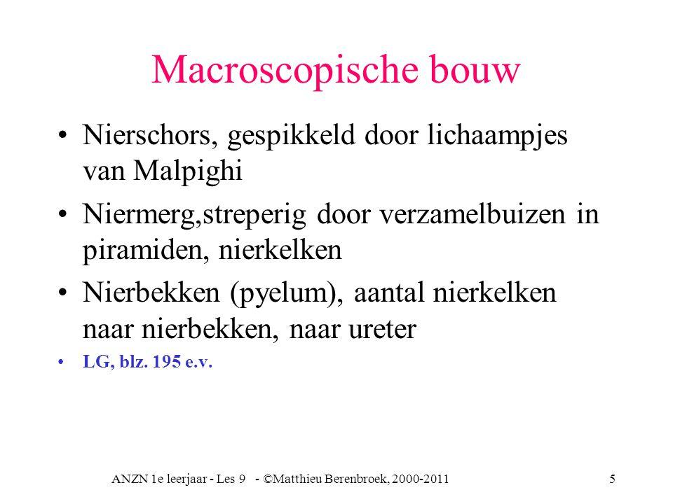 ANZN 1e leerjaar - Les 9 - ©Matthieu Berenbroek, 2000-20115 Macroscopische bouw Nierschors, gespikkeld door lichaampjes van Malpighi Niermerg,streperig door verzamelbuizen in piramiden, nierkelken Nierbekken (pyelum), aantal nierkelken naar nierbekken, naar ureter LG, blz.