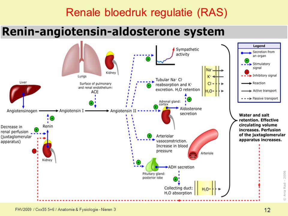 FHV2009 / Cxx55 5+6 / Anatomie & Fysiologie - Nieren 3 12 Renale bloedruk regulatie (RAS)