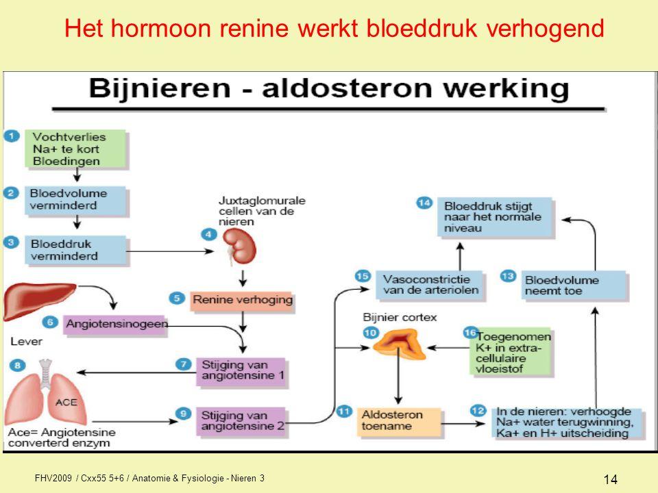 FHV2009 / Cxx55 5+6 / Anatomie & Fysiologie - Nieren 3 14 Het hormoon renine werkt bloeddruk verhogend