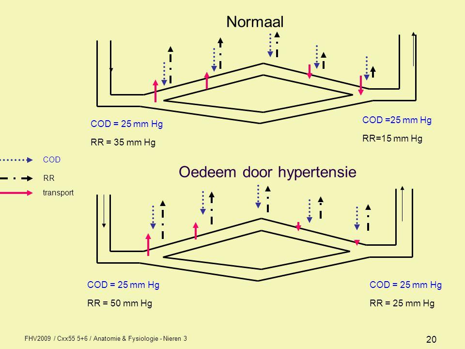 FHV2009 / Cxx55 5+6 / Anatomie & Fysiologie - Nieren 3 20 COD = 25 mm Hg RR = 50 mm Hg RR=15 mm Hg COD = 25 mm Hg RR = 35 mm Hg RR = 25 mm Hg COD RR t