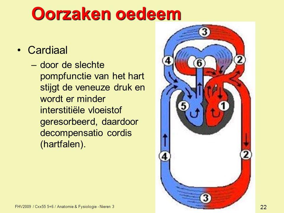 FHV2009 / Cxx55 5+6 / Anatomie & Fysiologie - Nieren 3 22 Oorzaken oedeem Cardiaal –door de slechte pompfunctie van het hart stijgt de veneuze druk en