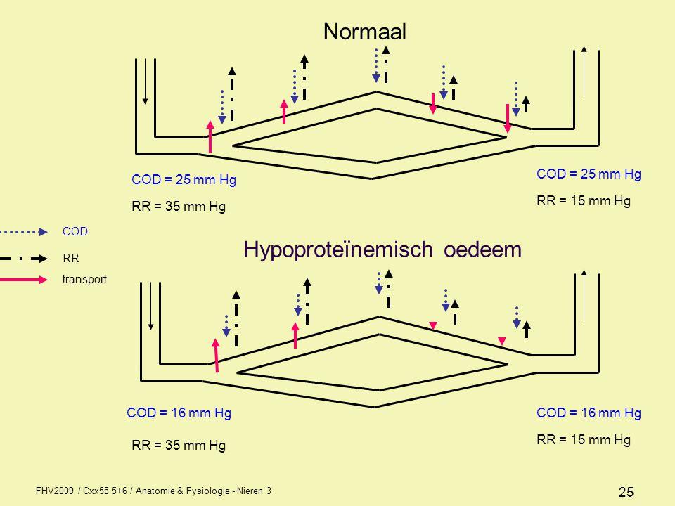 FHV2009 / Cxx55 5+6 / Anatomie & Fysiologie - Nieren 3 25 COD = 25 mm Hg COD = 16 mm Hg RR = 35 mm Hg RR = 15 mm Hg COD = 16 mm Hg COD = 25 mm Hg RR =