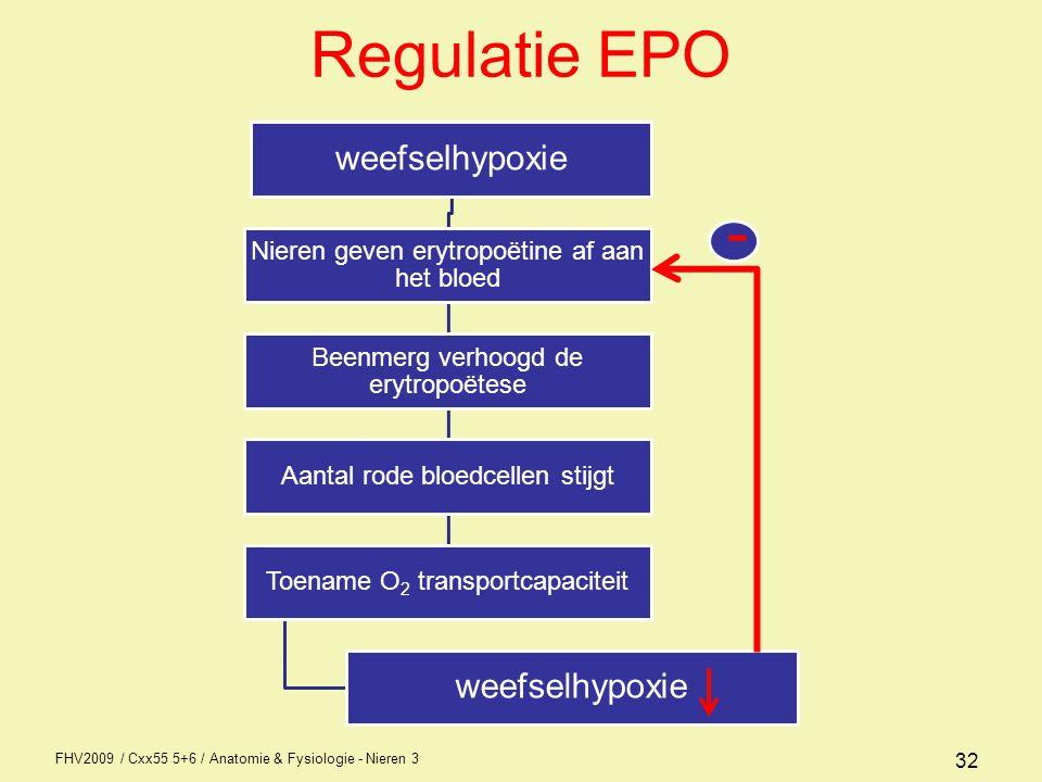 FHV2009 / Cxx55 5+6 / Anatomie & Fysiologie - Nieren 3 32 Regulatie EPO weefselhypoxie Nieren geven erytropoëtine af aan het bloed Beenmerg verhoogd d