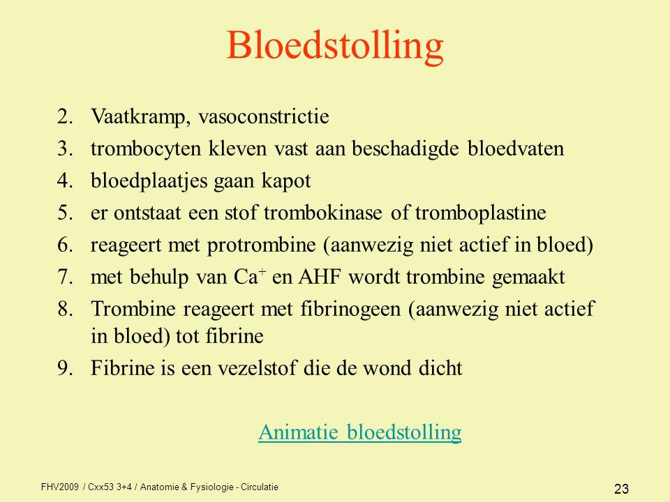 FHV2009 / Cxx53 3+4 / Anatomie & Fysiologie - Circulatie 23 Bloedstolling 2.Vaatkramp, vasoconstrictie 3.trombocyten kleven vast aan beschadigde bloedvaten 4.bloedplaatjes gaan kapot 5.er ontstaat een stof trombokinase of tromboplastine 6.reageert met protrombine (aanwezig niet actief in bloed) 7.met behulp van Ca + en AHF wordt trombine gemaakt 8.Trombine reageert met fibrinogeen (aanwezig niet actief in bloed) tot fibrine 9.Fibrine is een vezelstof die de wond dicht Animatie bloedstolling