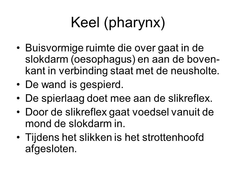 Keel (pharynx) Buisvormige ruimte die over gaat in de slokdarm (oesophagus) en aan de boven- kant in verbinding staat met de neusholte.
