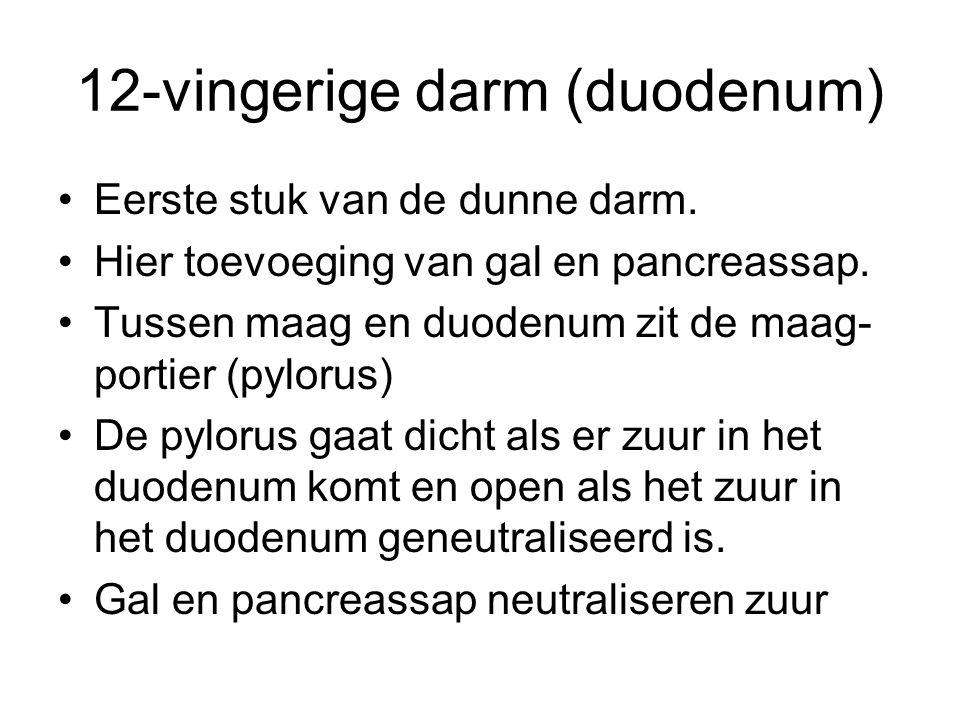Pancreas Ligt in de bocht van het duodenum.Produceert insuline en glucagon.