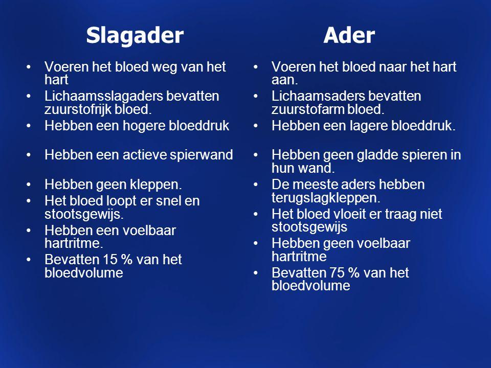 Slagader Ader Voeren het bloed weg van het hart Lichaamsslagaders bevatten zuurstofrijk bloed. Hebben een hogere bloeddruk Hebben een actieve spierwan