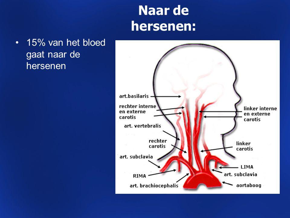 Naar de hersenen: 15% van het bloed gaat naar de hersenen