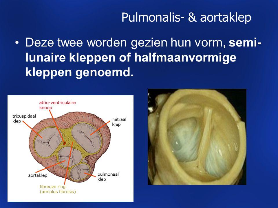 Pulmonalis- & aortaklep Deze twee worden gezien hun vorm, semi- lunaire kleppen of halfmaanvormige kleppen genoemd.