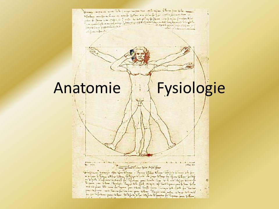 Anatomie [van het Griekse anatome: opensnijden] Ontleedkunde Bouw van het menselijk lichaam