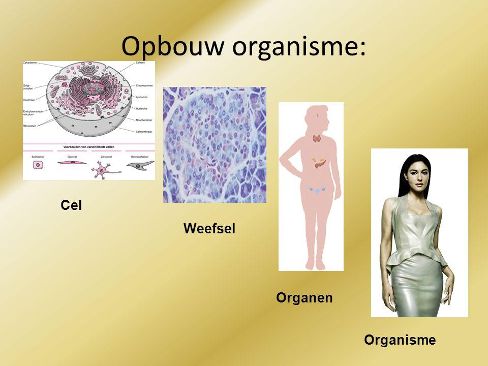 Opbouw organisme: Cel Weefsel Organen Organisme