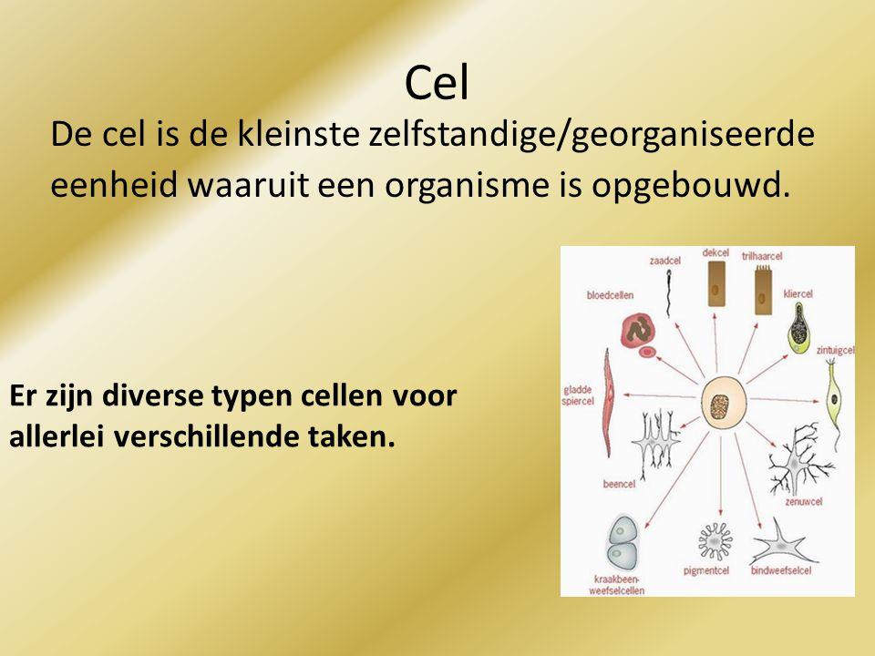 Cel De cel is de kleinste zelfstandige/georganiseerde eenheid waaruit een organisme is opgebouwd.